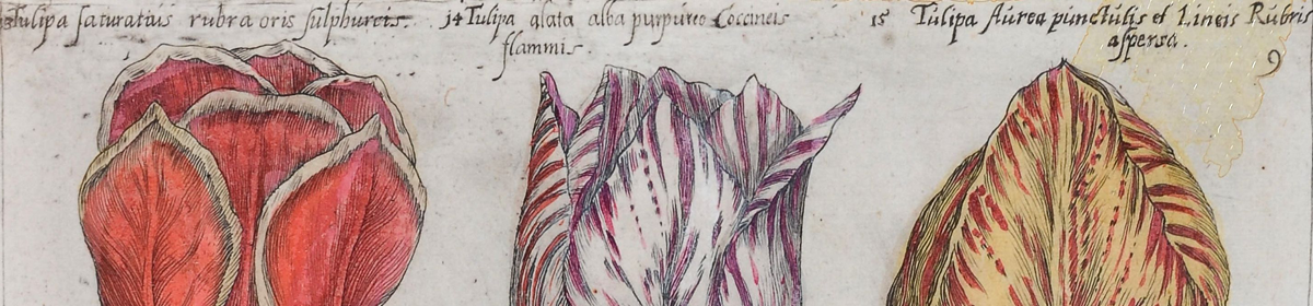 Flore de Gand